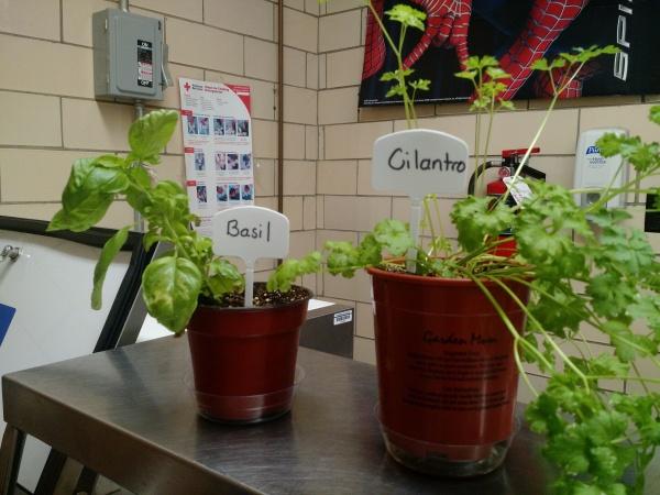 Herb plants.